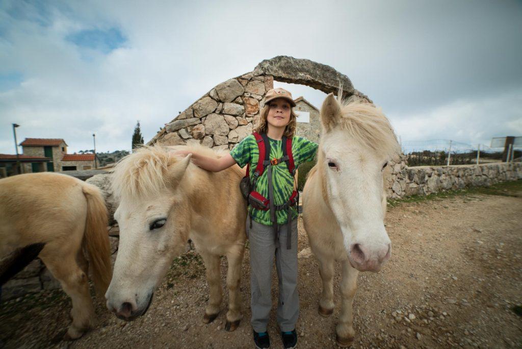 ponies on Hvar island