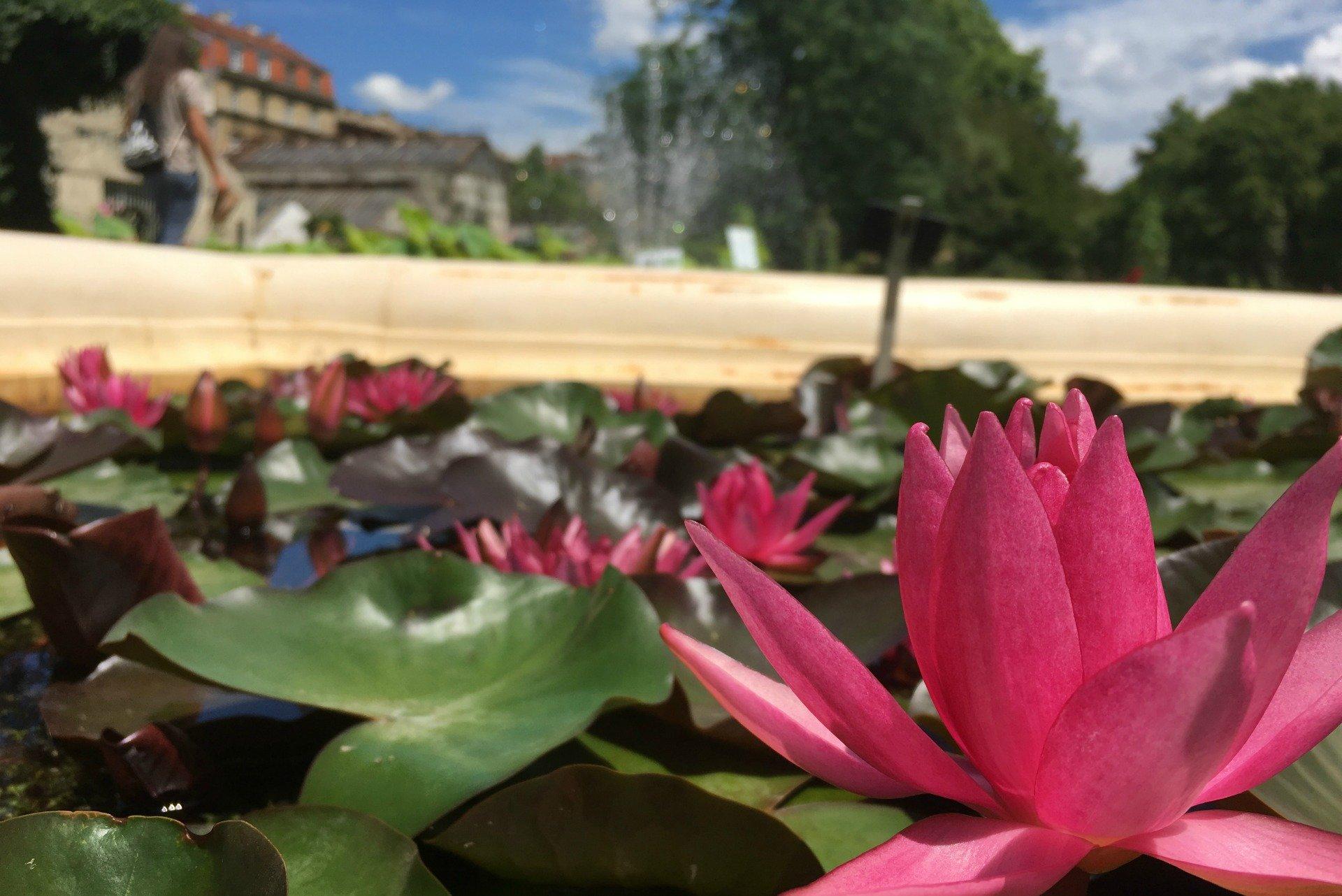 Zagreb botanic gardens