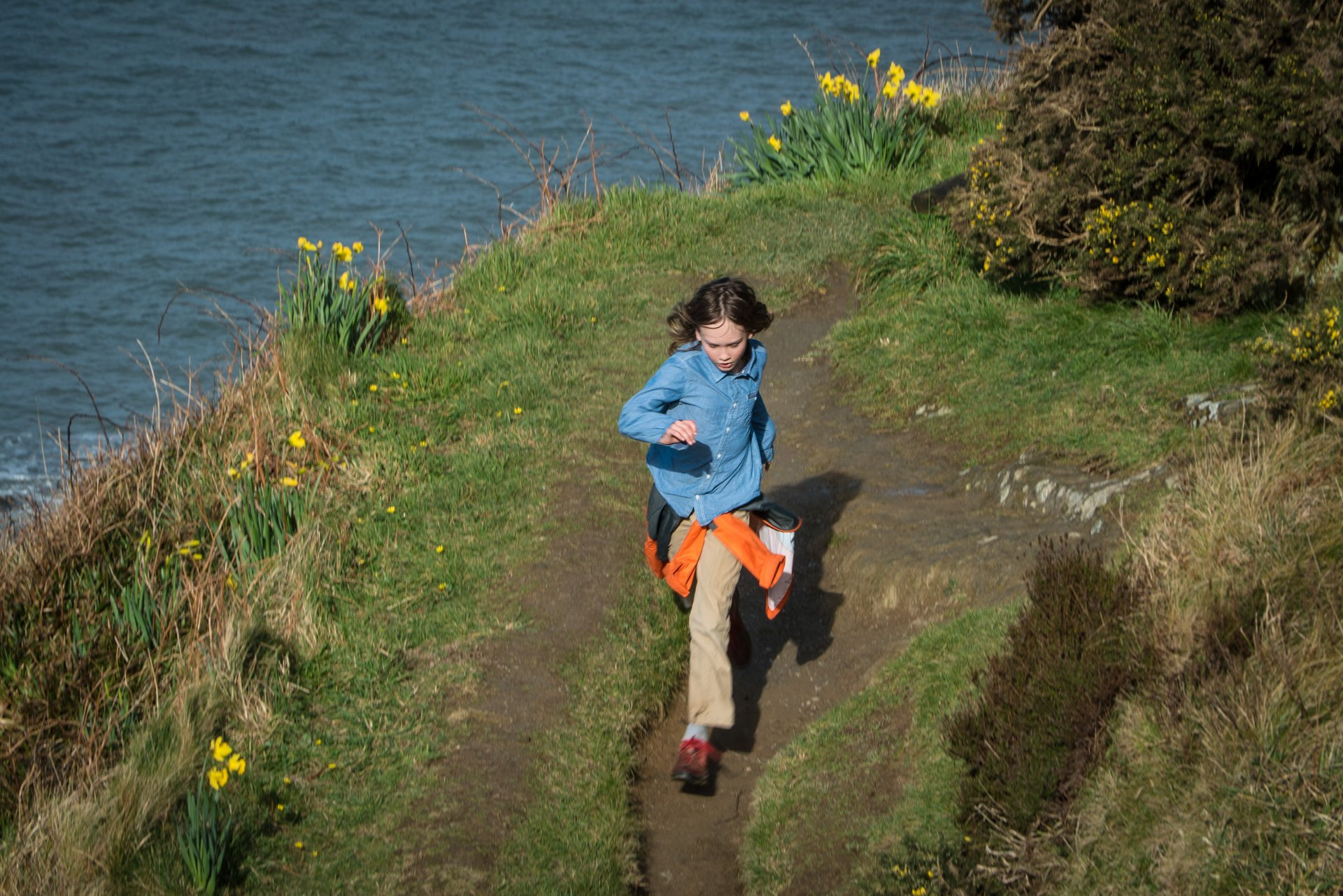 Daffodils on South Coast Trail
